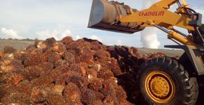 Tolak Rencana Uni Eropa, Indonesia Tetap Produksi Minyak Sawit