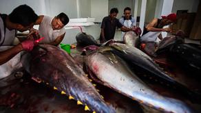 Neraca Perdagangan Perikanan Indonesia Nomor 1 di Asia Tenggara