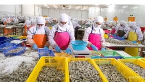 Komoditas Udang Berpotensi Tingkatkan Ekspor Perikanan Indonesia