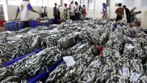 Ekspor Perikanan Indonesia Meningkat 24% di Semester Awal 2019