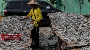 Permasalahan Dalam Sektor Perikanan Indonesia
