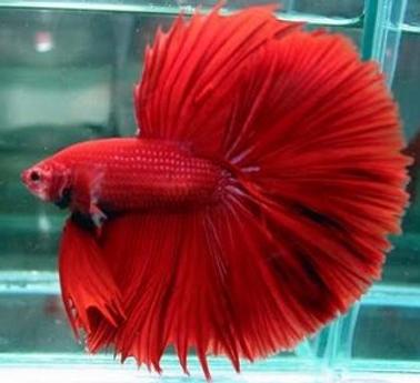 Unduh 680 Koleksi Gambar Ikan Warna HD Terpopuler