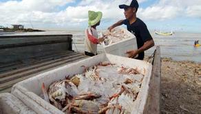 Ekspor Perikanan Jawa Tengah Capai Rp2,1 Triliun