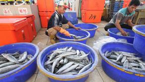 KKP Siapkan Strategi Untuk Atasi Dampak Corona pada Perikanan