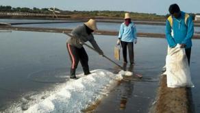 Menteri Susi: Harga Garam Turun Akibat Besarnya Volume Impor