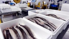 Pemerintah Kembangkan Lemari Pendingin Tenaga Surya Untuk Perikanan