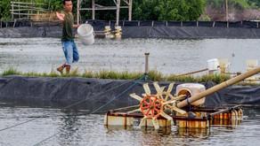 Manfaat Mineral Bagi Udang dan Ikan