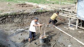 Tahap Dasar Pengolahan Tanah Tambak Udang