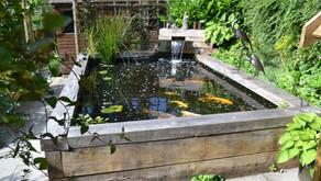 Siapkan 4 Alat ini Agar Kualitas Air Kolam Ikan Tetap Terjaga