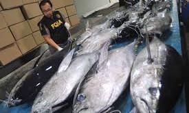 Susi Pudjiastuti : Indonesia Penyuplai Tuna Terbesar di Dunia