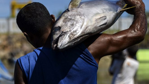 Ekspor Perikanan Indonesia Masih Kalah dengan Vietnam. Ini Penyebabnya