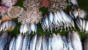 Inovasi Efektif untuk Jaga Stok Ikan di Laut