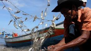 Hingga Kuartal II 2019, Produksi Perikanan Tangkap Meningkat 17 Persen