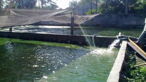 Cara Menaikkan dan Menurunkan pH Air Kolam