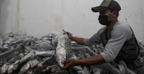 Taat Protokol Demi Lancarnya Ekspor Perikanan
