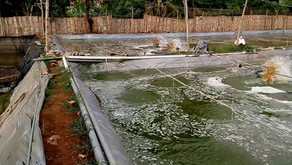 Pengaruh Salinitas Terhadap Usaha Tambak Udang