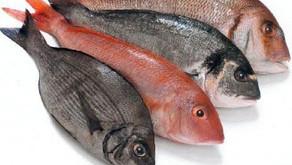 Begini Ciri-Ciri Ikan Mengandung Formalin