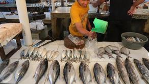 Ekspor Perikanan Dari DIY Meningkat Selama Pandemi