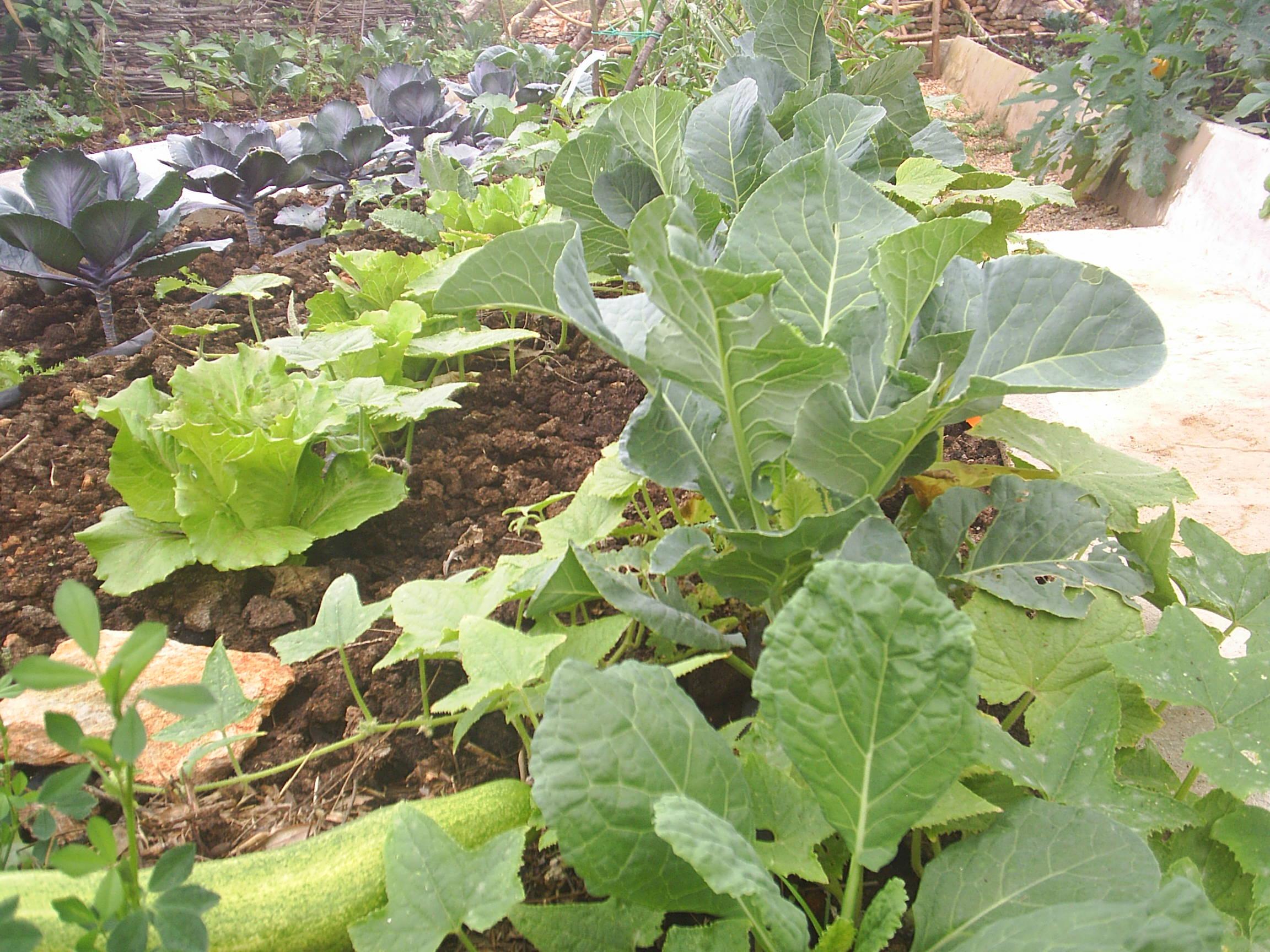 Polytunnel planting10.JPG