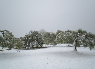 Snowfall in Catalonia