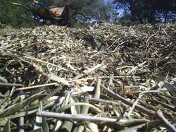 Chipped mulch.jpg