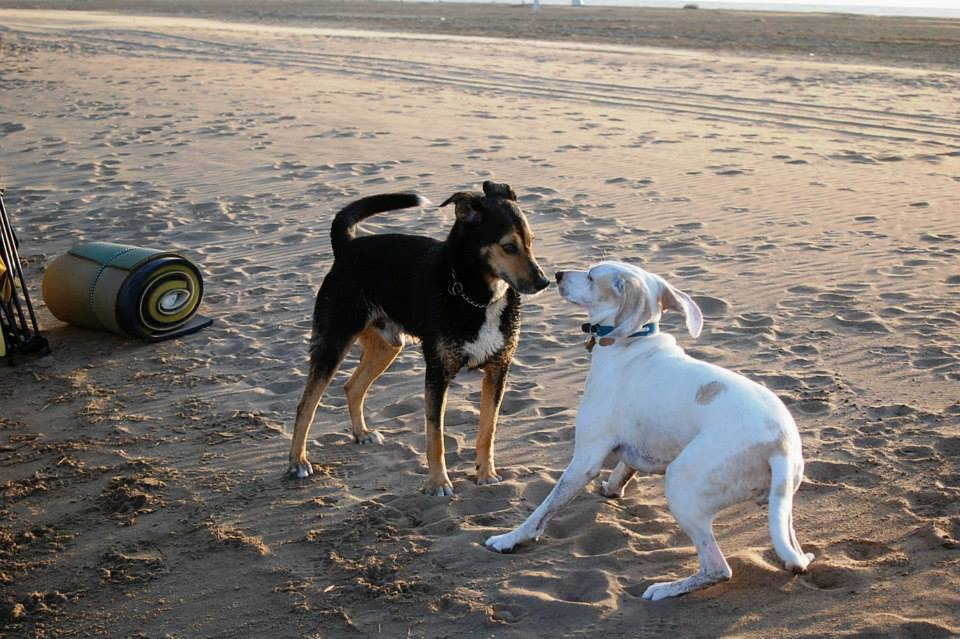 Dogs on the beach.jpg