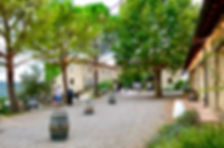 piazza birra.jpg