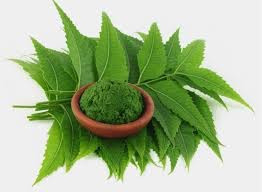 In Ayurvedic massage neem is very important