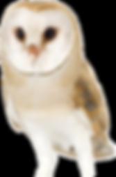 website owl.png