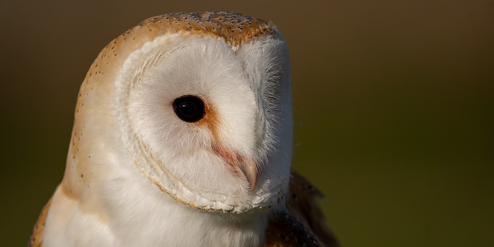 Hadlow Village Hall (An Evening with Owls)