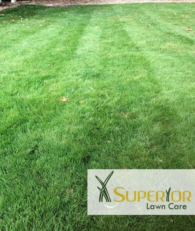 Kent based lawn care service
