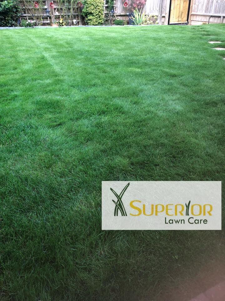 maidstone lawn care