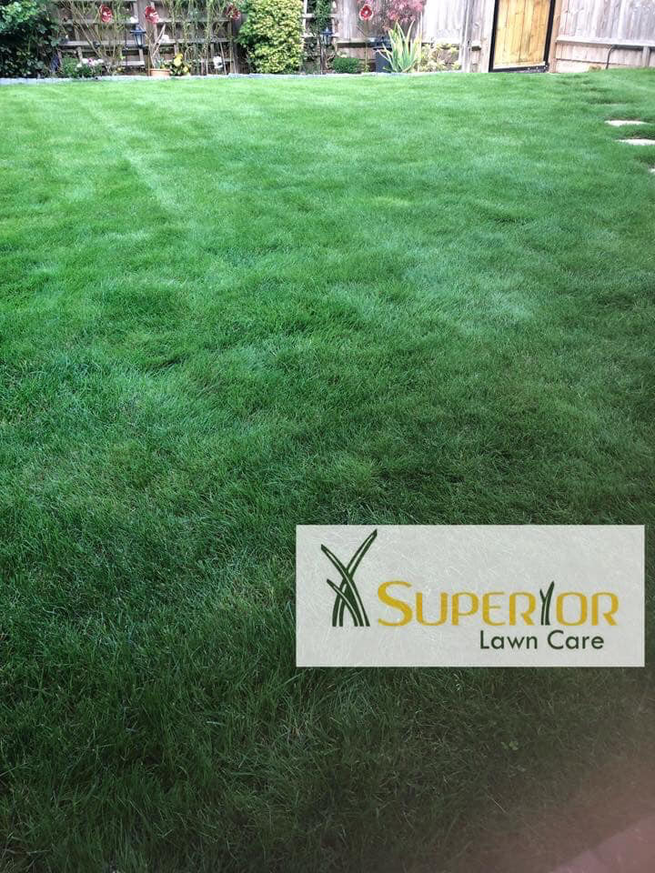 Your local Lawn treatment expect, We offer all year round lawn care service that will give you a lawn to be proud of. We cover Maidstone and Surranding areas. Prices start from as little as £15 per lawn treatment. Give yours self a weed free beautiful green lawn. Sheppey, Sittingourne, Rainham.