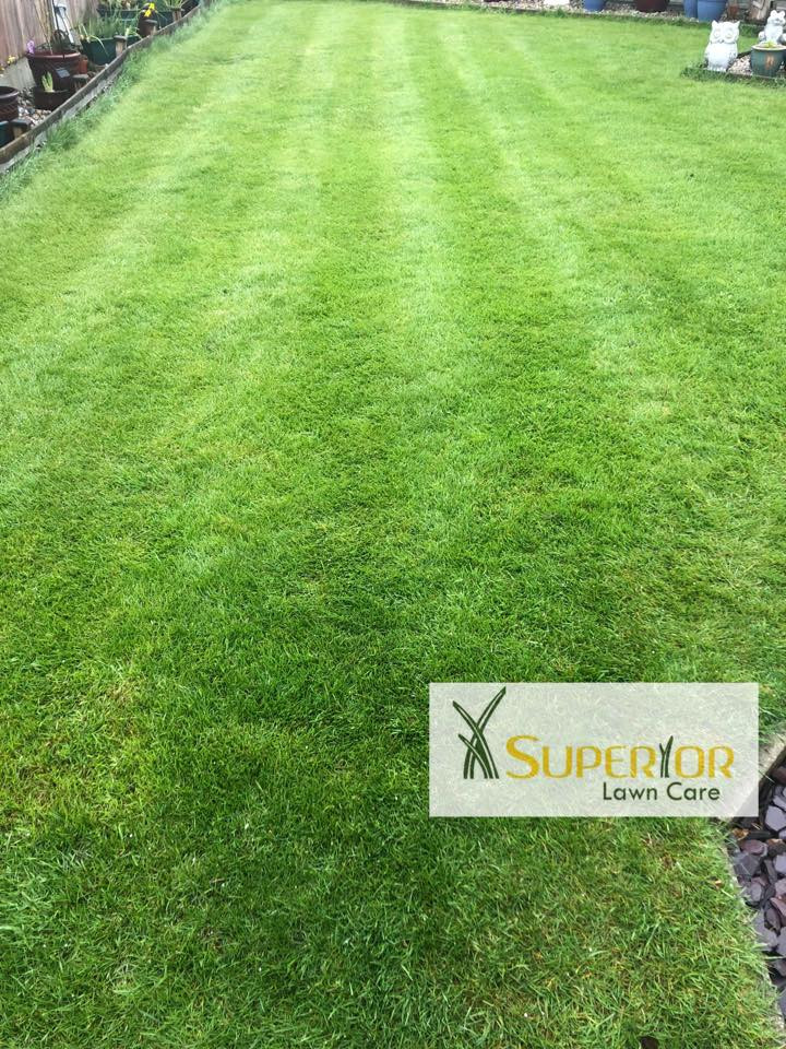 lawn your lawn