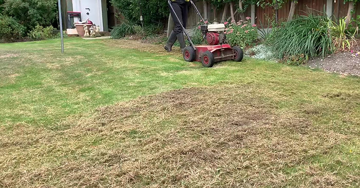 lawn scarification is much needed towards a more beautiful lawn. Should be scarified once a year at least, Call now for a free quoatation. love your lawn