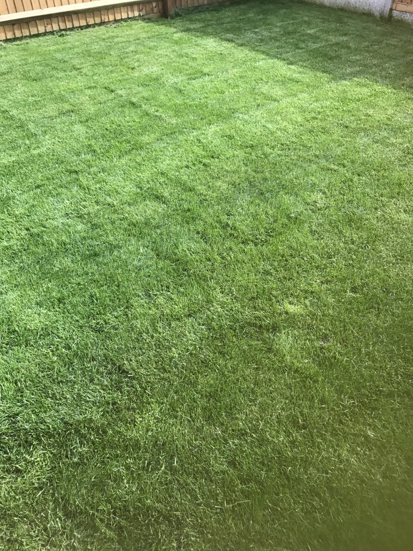 maidstone lawn care service