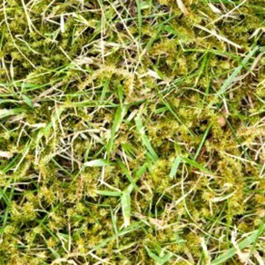 Lawn Moss Treatment
