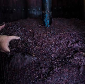 """""""Il sapore dalle cose ordinarie, l'arte del vino""""  5"""