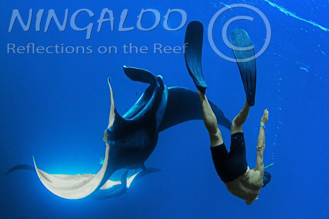 Oceanic Manta Rays