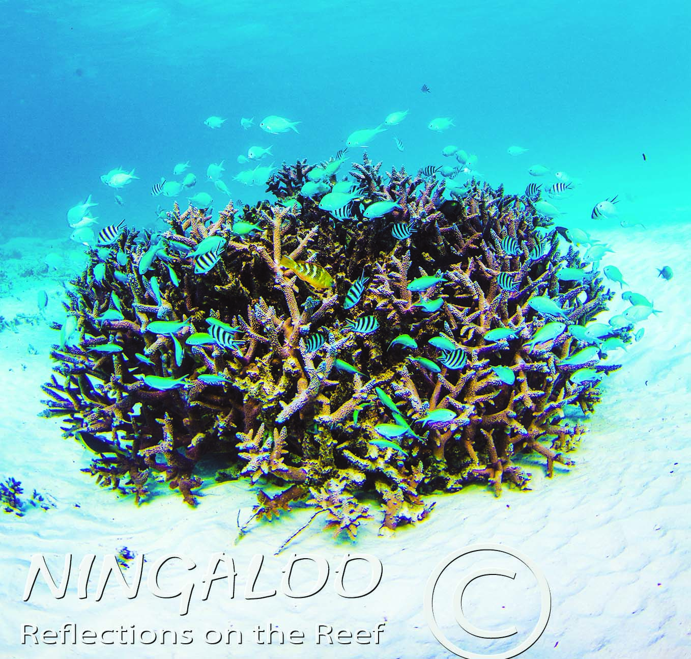 Coral at Ningaloo Reef