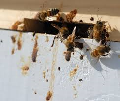 Integrated Pest Management - New service offered by Abbigail Honey