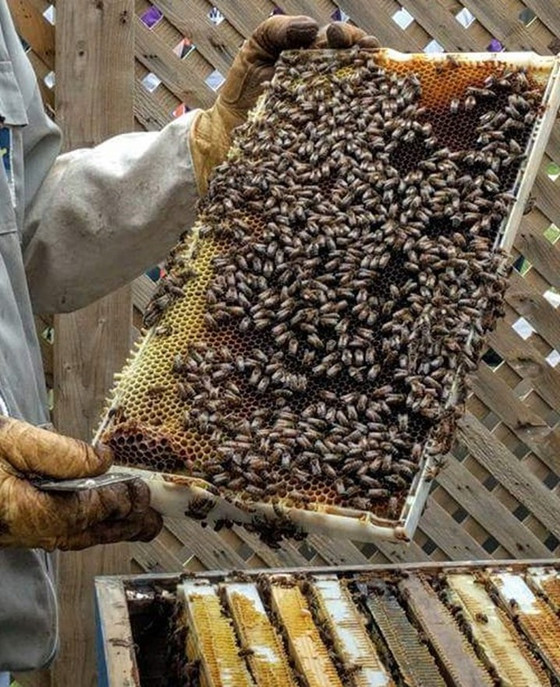 KNOWLEDGE - THE KEY TO SUCESSFUL BEEKEEPING!!!!