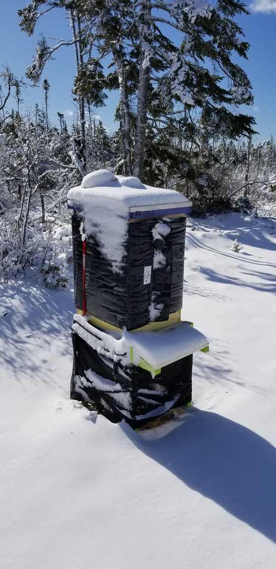 Fall is Coming!!  Its Time to Consider What Has to bee Done to Your Hives for Winter