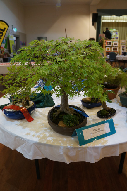 Horticulture Show 2019 - 41 of 65.jpeg