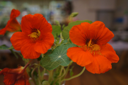 Horticulture Show 2019 - 55 of 65.jpeg