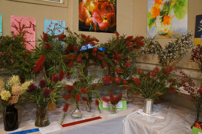 Horticulture Show 2019 - 36 of 65.jpeg