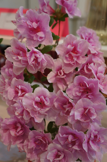 Horticulture Show 2019 - 56 of 65.jpeg