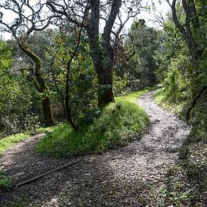 Coalmine Trail