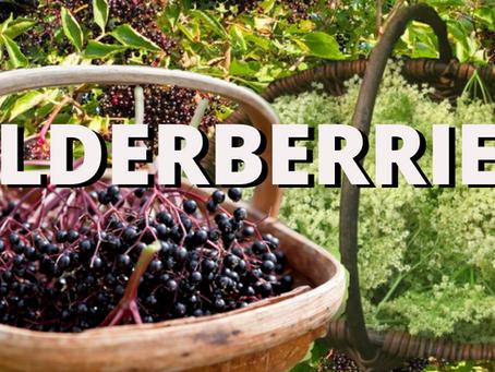 Elderberries and Elder-flowers for Healing