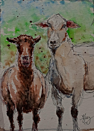 Sheep - Gray Artus